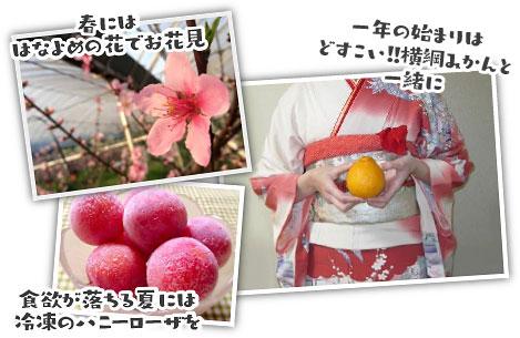 春には「はなよめ」の花でお花見、一年の始まりは「どすこい!!横綱みかん」と一緒に。