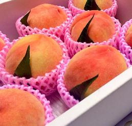 【贈答用】桃