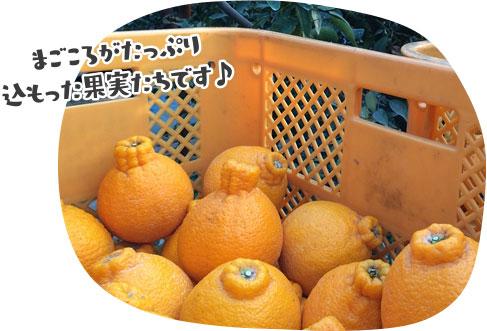 安定した甘みを味わえる最高級品種「肥の豊」
