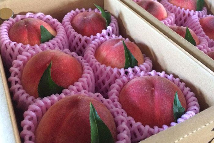 【贈答用】温室桃1.2kg(5~6個入り)