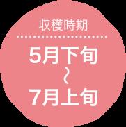 収穫時期:5月下旬〜7月上旬