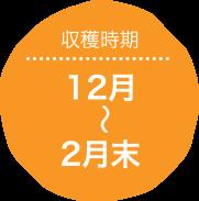 収穫時期:12月〜2月末