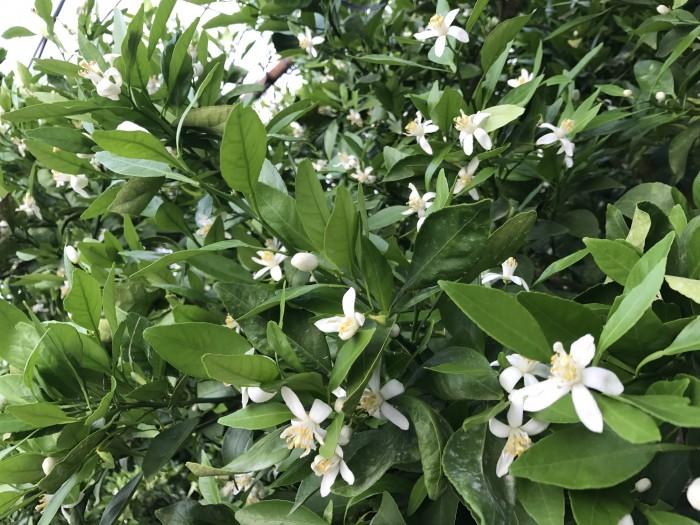 自然の花束